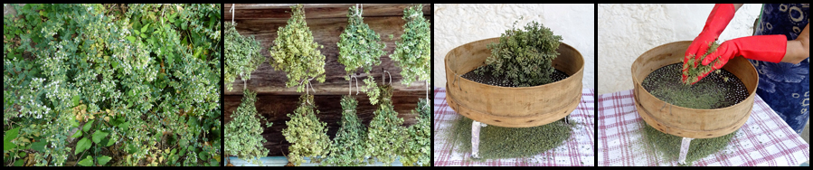 Grind Aromatic Plants with Sieves for Frumenty